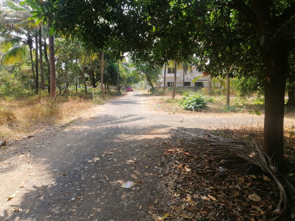 6.25 cents Residential Land for  Sale In Peramangalam , Thrissur