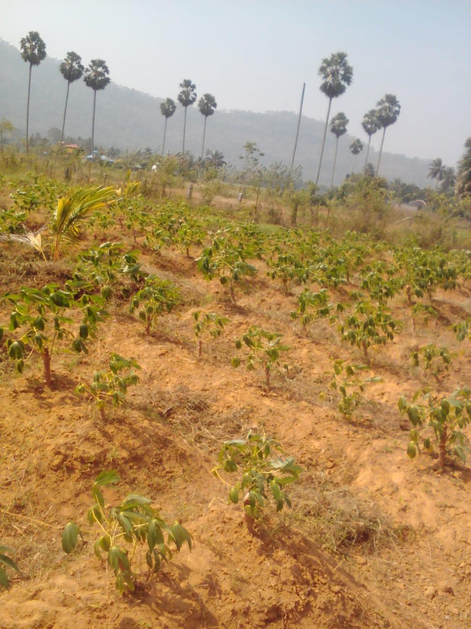 70 CENTS LAND FOR SALE NEAR POTHUNDI DAM, PALAKAD