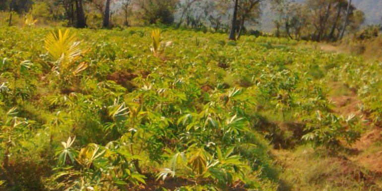 Palaghat Land Image 5