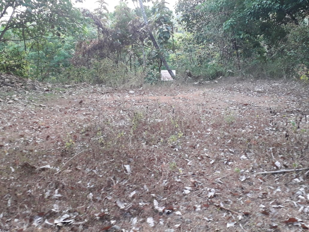 25 cents of house plot for sale in Neeloor, Palai, Kottayam