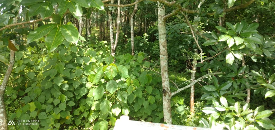 3.92 Acres of farm /Residential land for sale at Wadakkanchery,  Kerala,