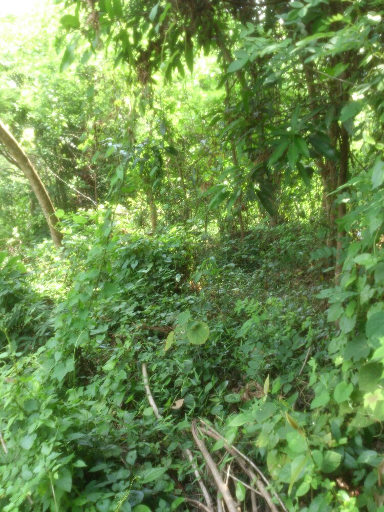 3.5 Acre Plot for sale in a good rate at Thrissur