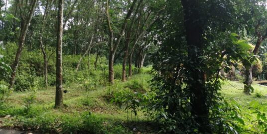 32 cents of land both for residential and farming purpose for sale at Mylapara, Pathanamthitta.