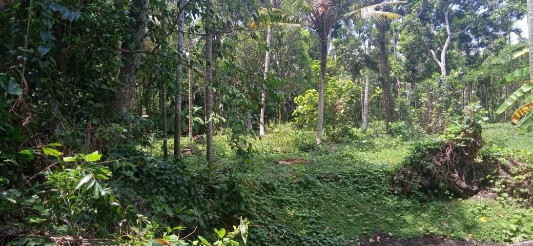 1 acre 5cent land in vaikkom kottayam