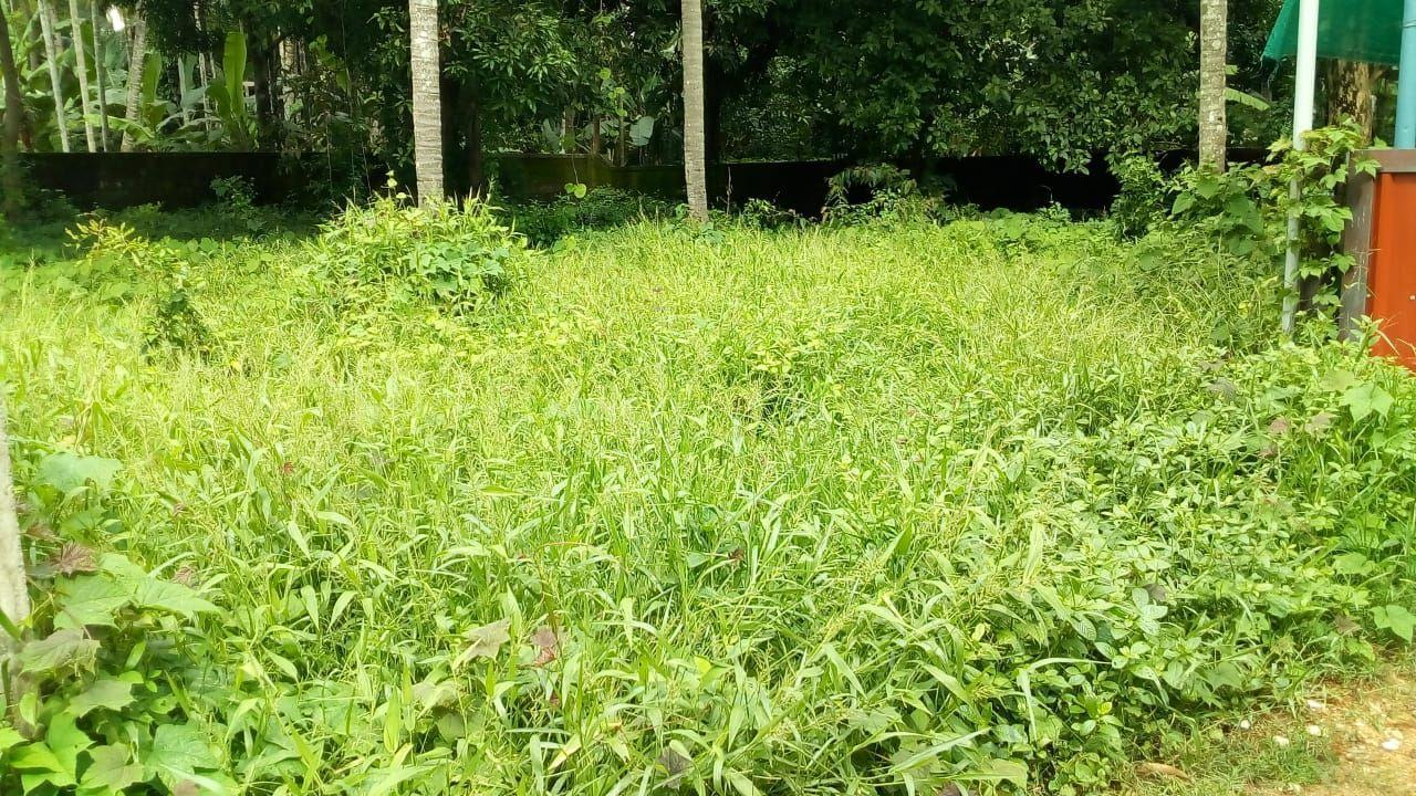 13.5 cent residential land for sale in Chembukaavu, Thrissur,