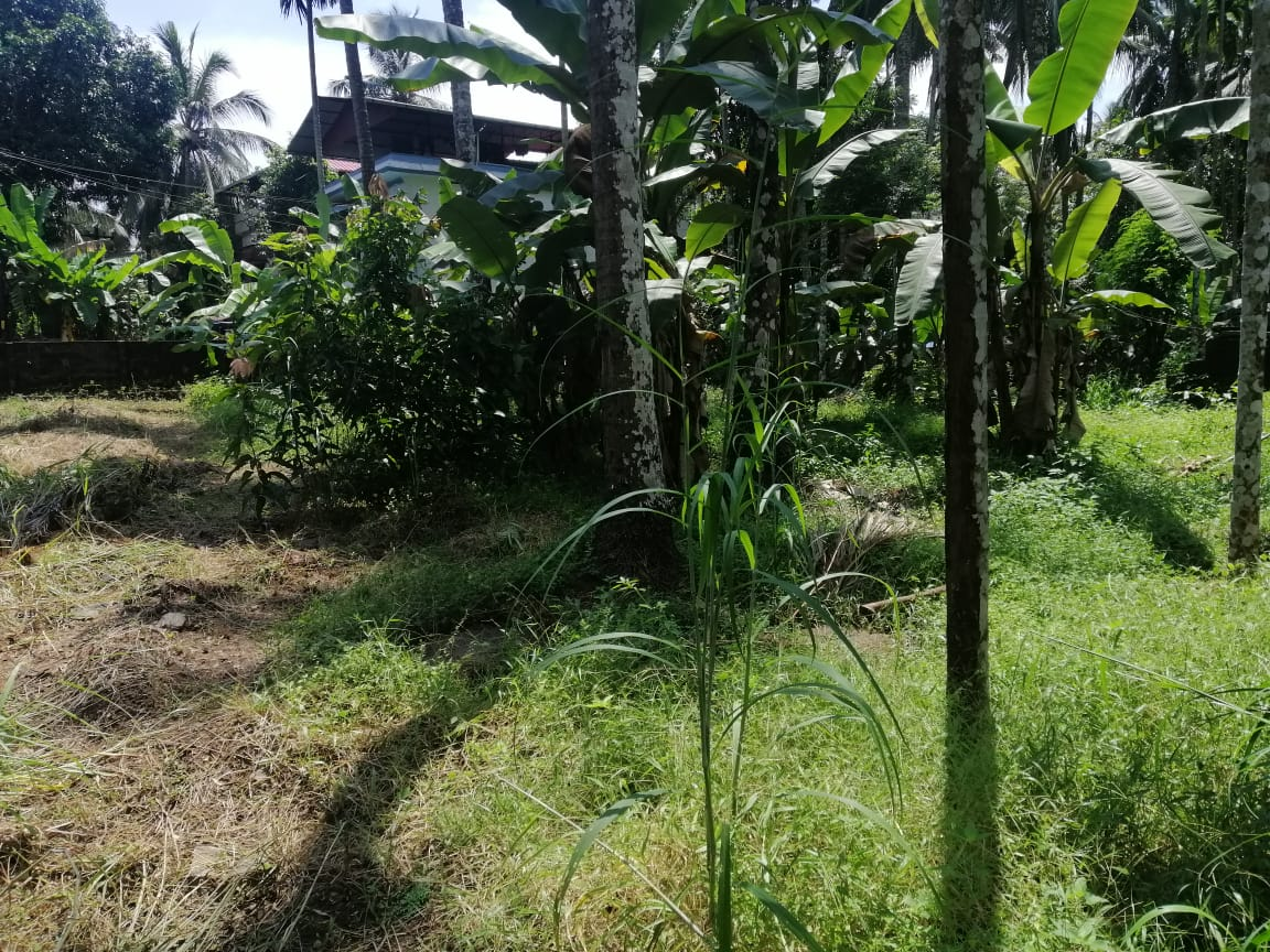 50 cent residential land for sale near Kerala Varma College,Thrissur,