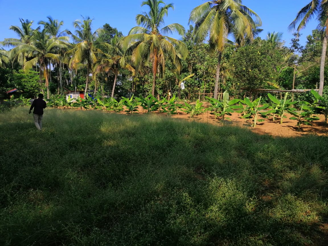 48.5 cent land for sale in Varadiyam Thrissur.