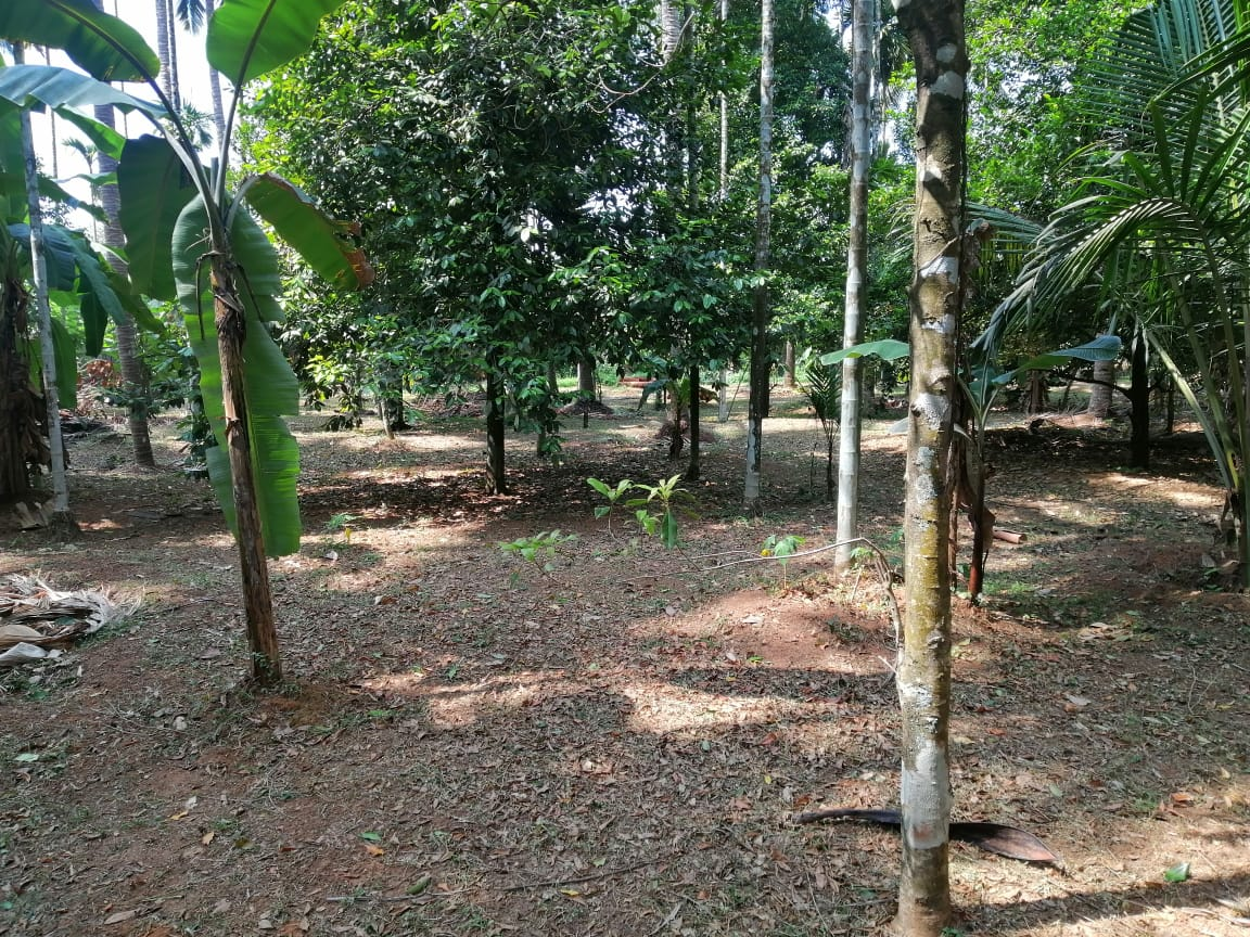 5 bhk house for sale in mg kavu,thrissur .