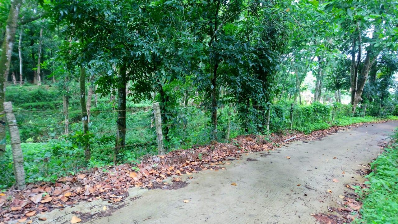 Land for Sale in Kalathipady,Kottayam