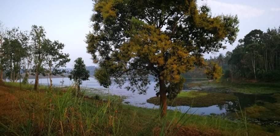 Lake View Land For Sale in Wayanad Near Karapuzha Dam