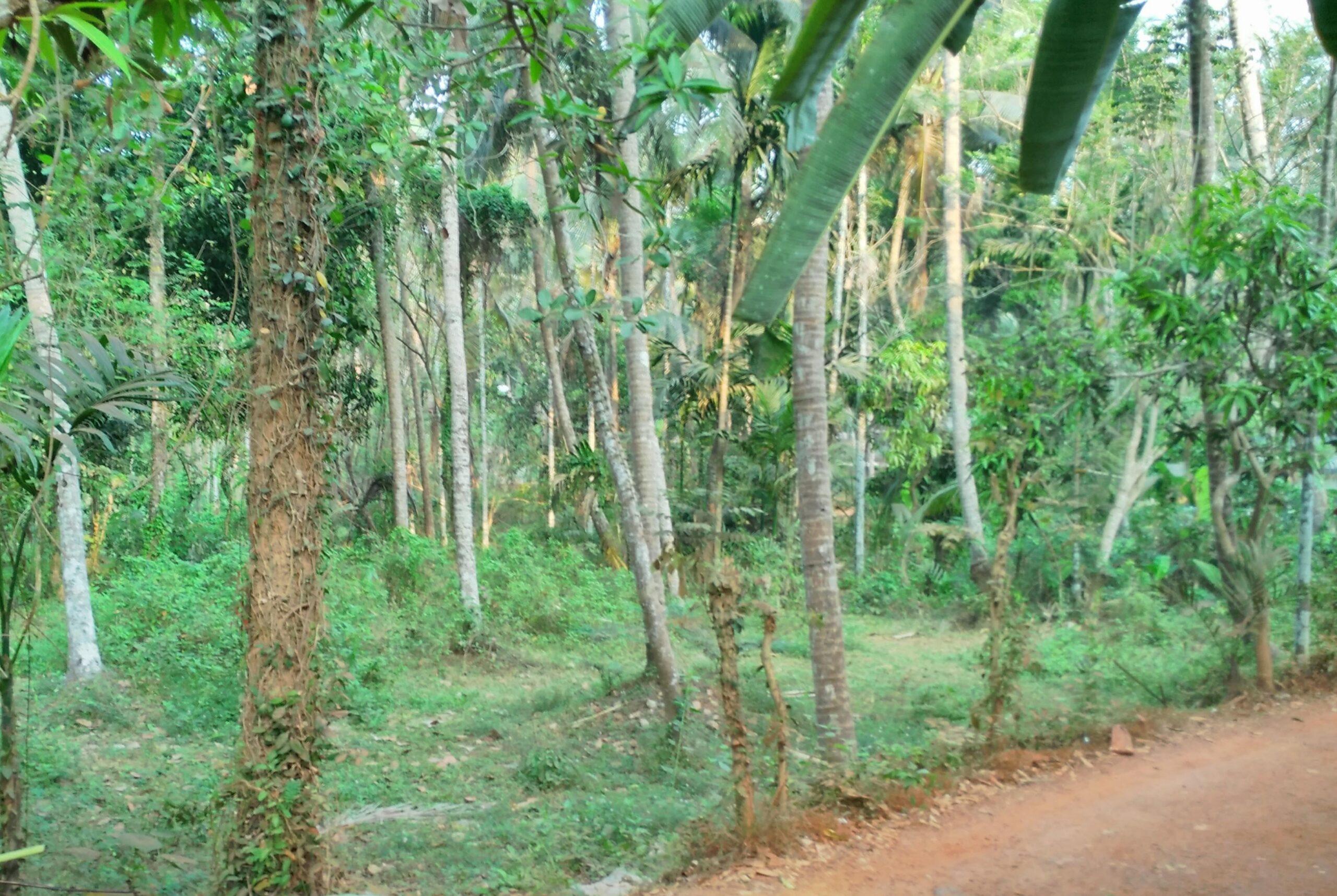 20 Cents Residential land in Iringal near National Highway, Vatakara