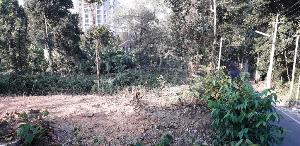 Photo No. 11